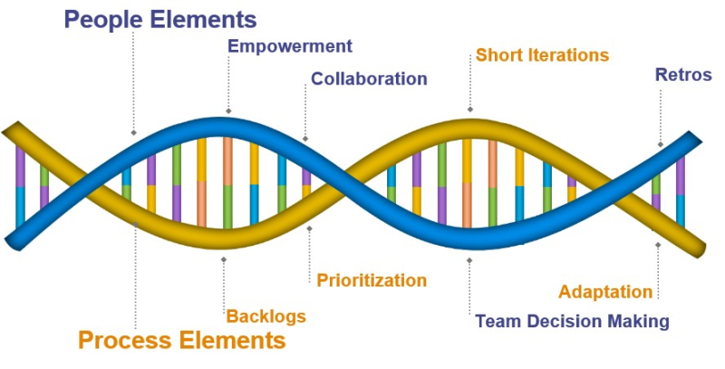 Agile DNA 1