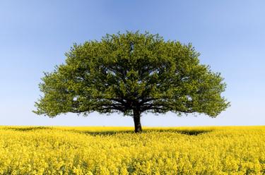 Tree_of_agile_knowledge_2