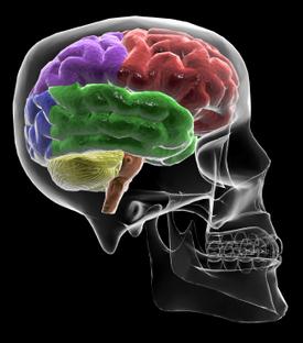 Right_brain_pm